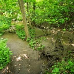 čistilno blato v gozdu