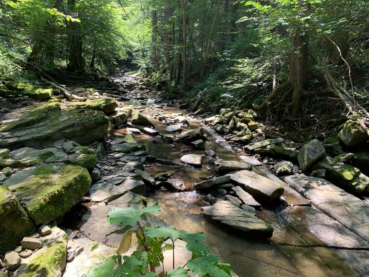 potok v gozdu