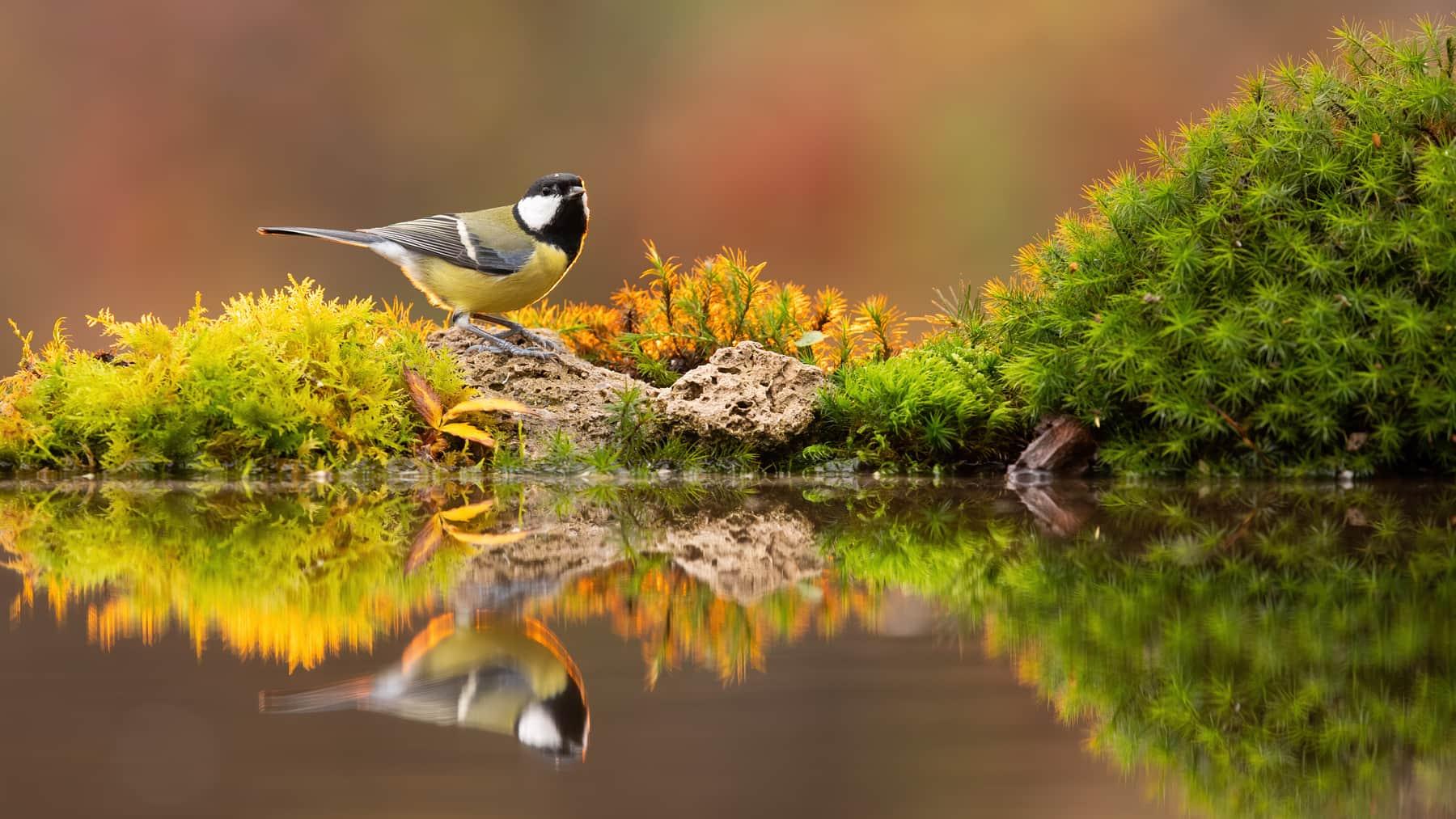 odsev ptice v vodi